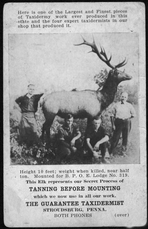An early advertisement for a Stroudsburg taxidermist.